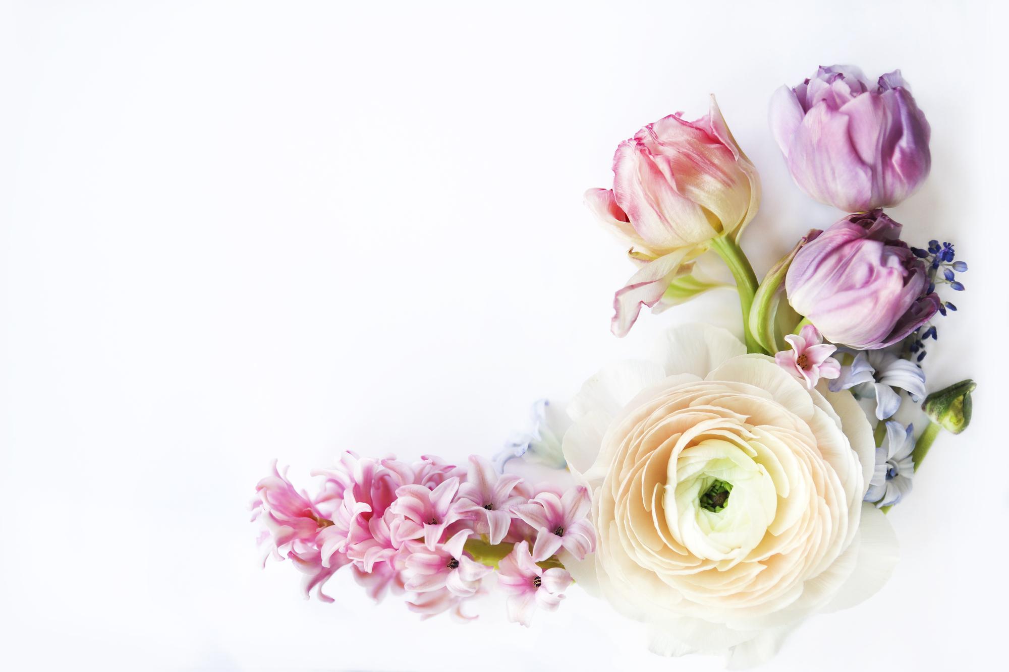 それぞれの花が持つ意味とは? お祝いギフトに最適なのはどの花?